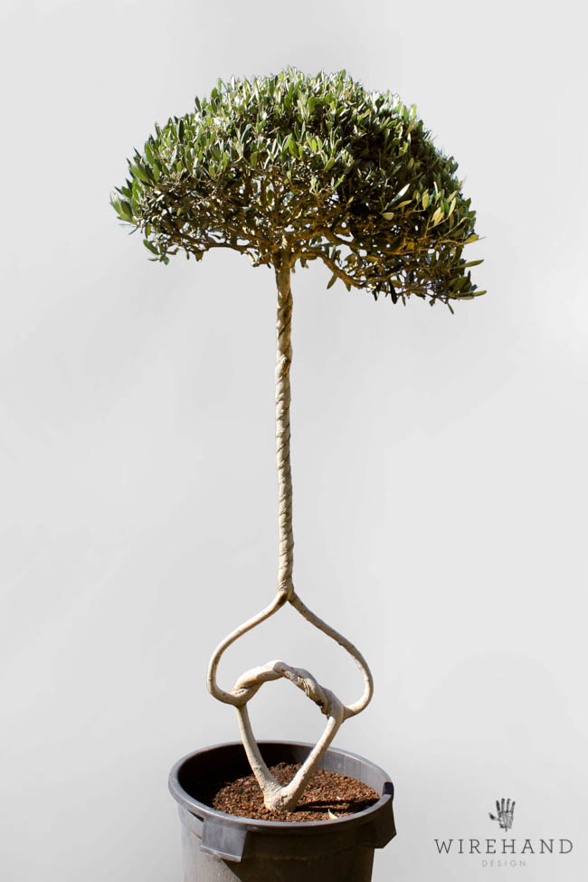 Wirehand_TreeShoot_10