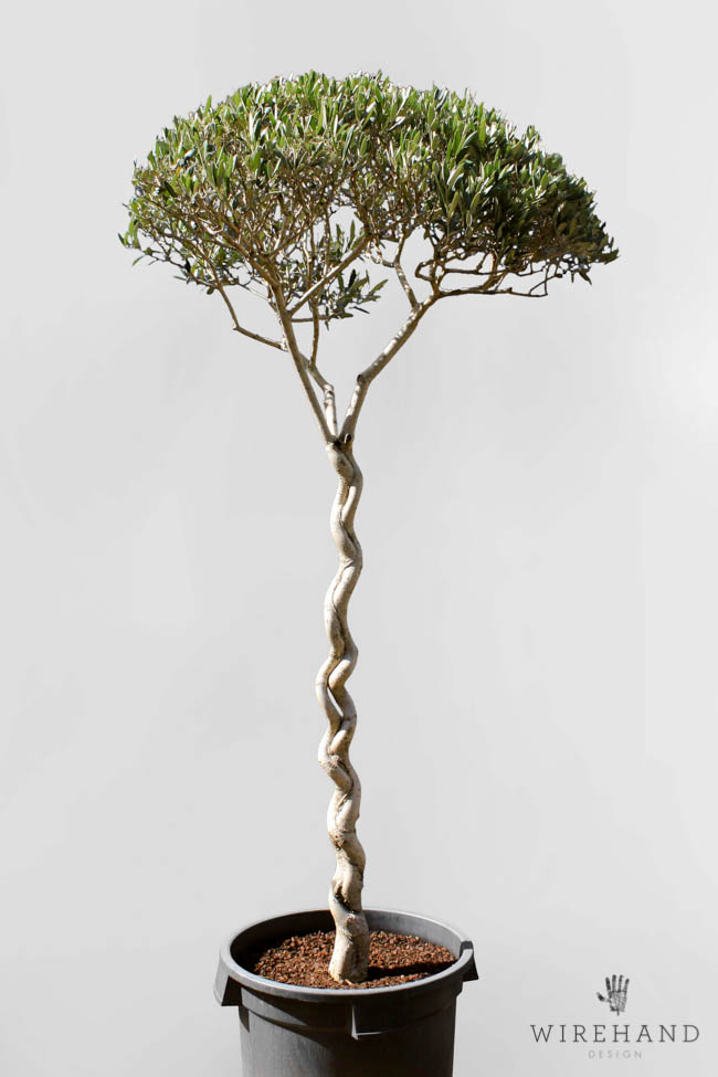 Wirehand_TreeShoot_11