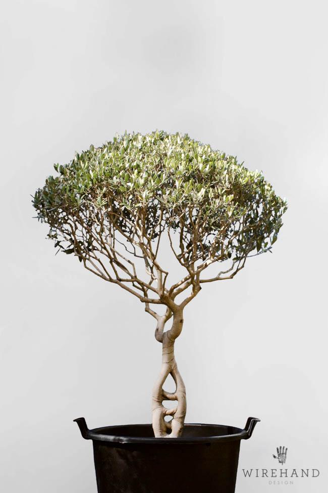 Wirehand_TreeShoot_12
