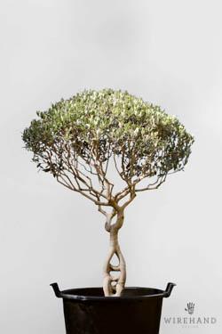 Wirehand_TreeShoot_12_thumb