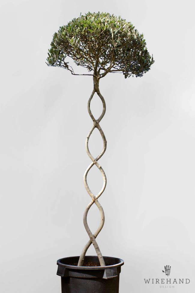 Wirehand_TreeShoot_13