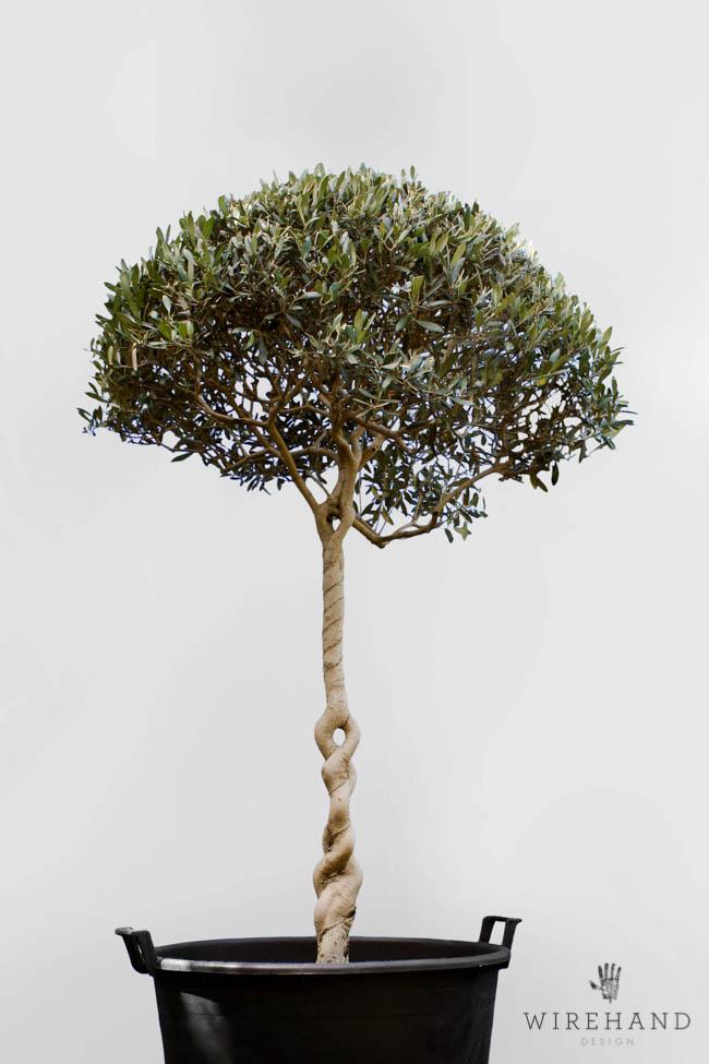 Wirehand_TreeShoot_14