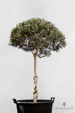 Wirehand_TreeShoot_14_thumb