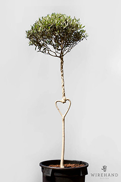 Wirehand_TreeShoot_16_thumb