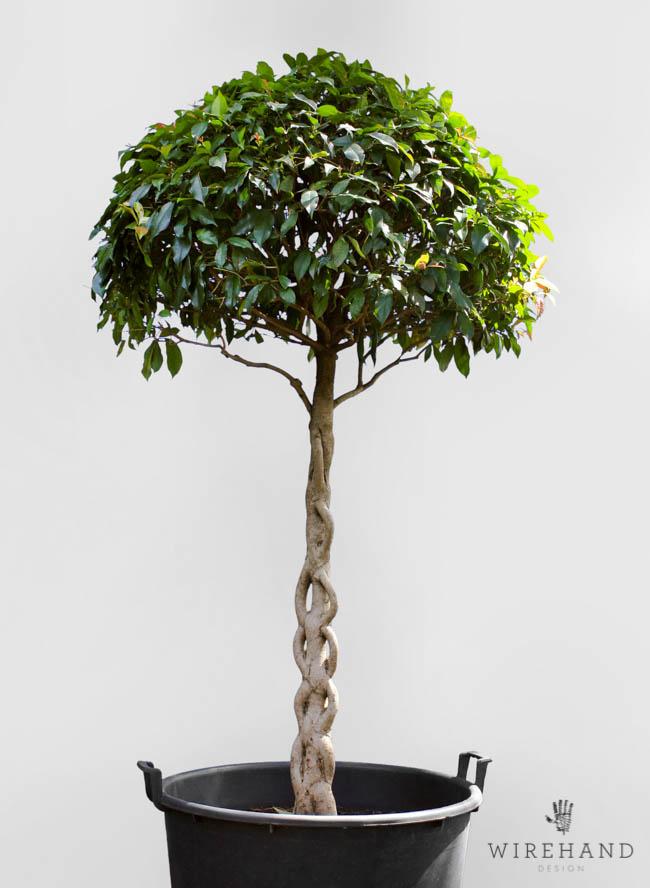 Wirehand_TreeShoot_17