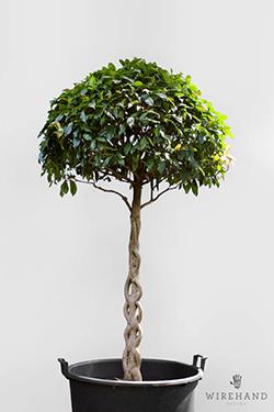 Wirehand_TreeShoot_17_thumb