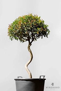 Wirehand_TreeShoot_18_thumb