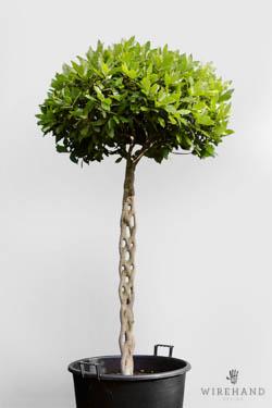 Wirehand_TreeShoot_1_thumb