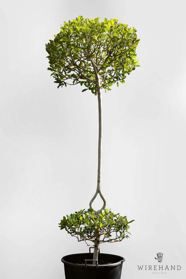 Wirehand_TreeShoot_2