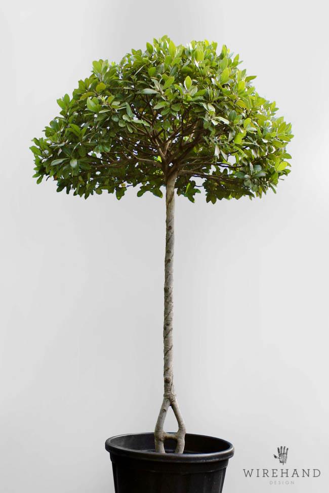 Wirehand_TreeShoot_3