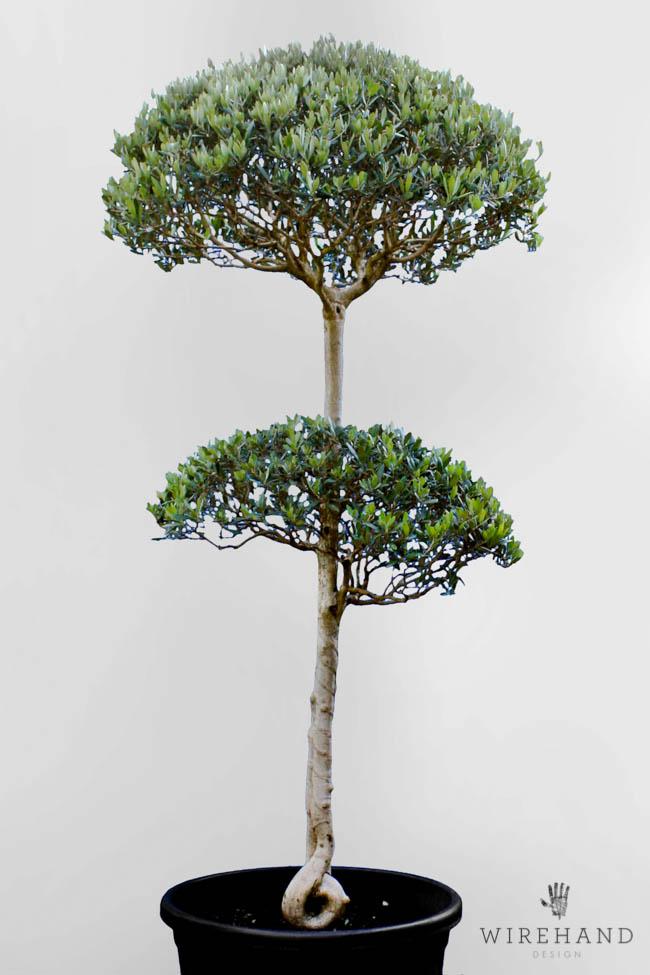 Wirehand_TreeShoot_4