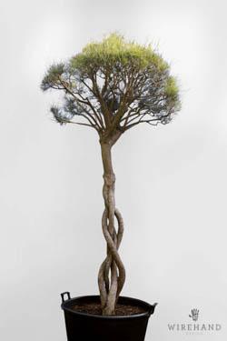 Wirehand_TreeShoot_5_thumb