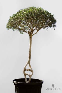 Wirehand_TreeShoot_6_thumb