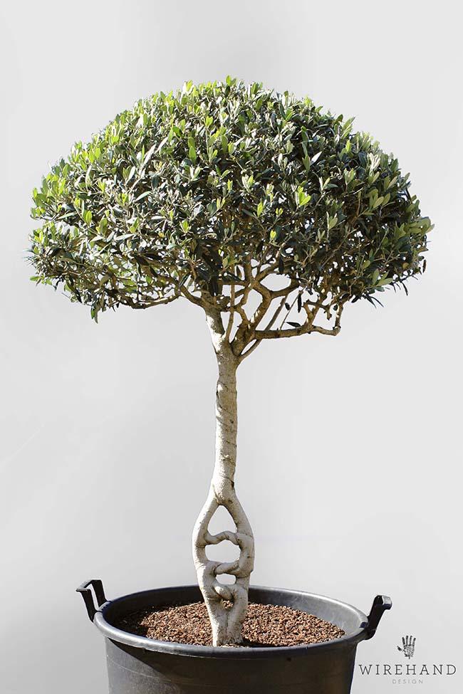 Wirehand_TreeShoot_7