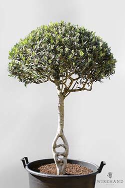 Wirehand_TreeShoot_7_thumb