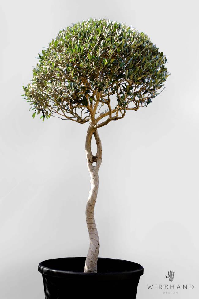 Wirehand_TreeShoot_8