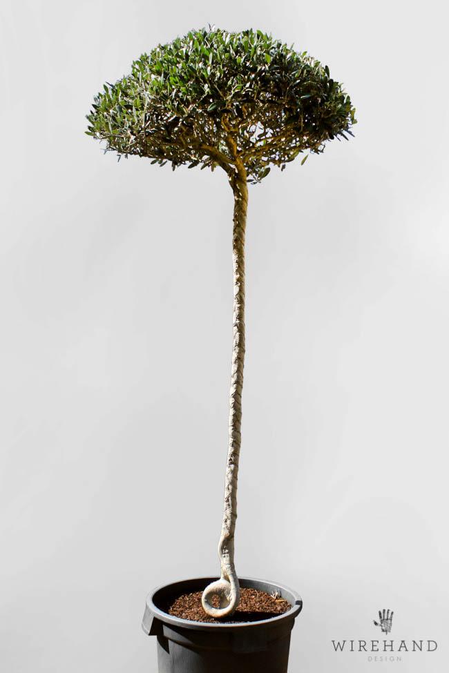 Wirehand_TreeShoot_9